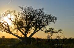 Заход солнца сафари Стоковое Изображение