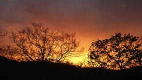 Заход солнца силуэта дерева Стоковые Изображения
