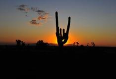 Заход солнца силуэта кактуса цветастый, Аризона, Соединенные Штаты Стоковое фото RF