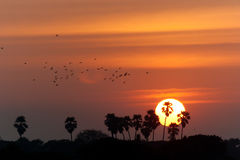 Заход солнца силуэта пальм Стоковые Фотографии RF