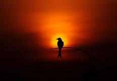 Заход солнца силуэта птицы Стоковые Изображения RF