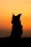 заход солнца собаки Стоковое Фото