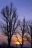 Заход солнца с деревьями Стоковая Фотография
