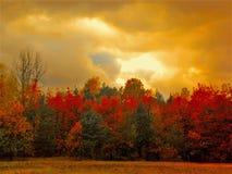 Заход солнца с деревьями Стоковые Изображения RF