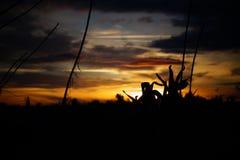Заход солнца с заводом Стоковое Фото