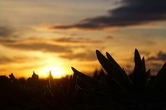 Заход солнца с законспектированным заводом Стоковая Фотография RF