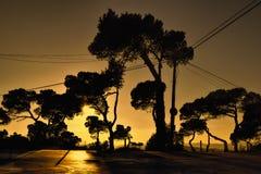 Заход солнца с изогнутым силуэтом деревьев Стоковые Фотографии RF