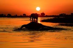 Заход солнца слона Стоковые Изображения RF