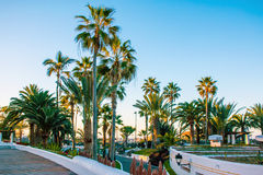 Заход солнца с пальмами в курорте Стоковые Изображения