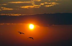 Заход солнца с птицами Стоковое Изображение