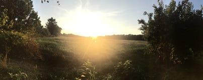 Заход солнца с рамкой дерева Стоковые Изображения RF