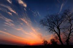 Заход солнца с румяными облаками и деревом Стоковое Фото