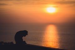 Заход солнца с сиротливой обезьяной Стоковые Изображения