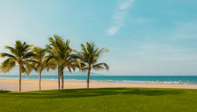 Заход солнца с сиротливой пальмой кокоса стоковое фото