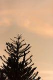 Заход солнца с силуэтом выходит передний план Стоковое Изображение RF