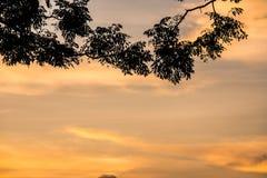 Заход солнца с силуэтом выходит передний план Стоковые Фотографии RF