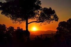 Заход солнца с силуэтом дерева, красное солнце над горой Стоковое Изображение