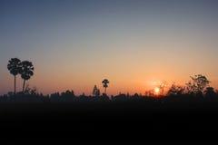 Заход солнца с силуэтом Таиланда дерева plam Стоковые Изображения RF