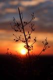 Заход солнца с сухим цветком Стоковое фото RF