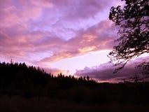 Заход солнца с темными деревьями Стоковые Изображения RF
