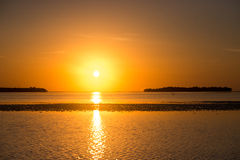 Заход солнца с цаплей Стоковое фото RF