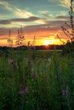 Заход солнца с цветками стоковые фото