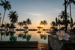 Заход солнца с plumeria стоковая фотография