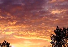Заход солнца с Silhoettes Стоковое Изображение