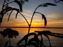 Заход солнца текила Стоковая Фотография RF