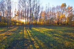 Заход солнца теней деревьев Стоковое Фото