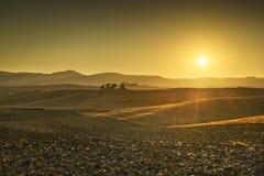 Заход солнца Тосканы Maremma Деревья, холмы и зеленые поля в backlig Стоковая Фотография RF