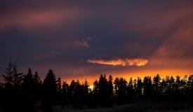 Заход солнца холмов Cypress Стоковое Изображение