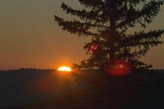 Заход солнца холмов Cypress Стоковое Фото