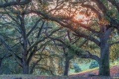 Заход солнца чапареля стоковые фотографии rf