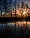 Заход солнца через деревья Стоковое Изображение
