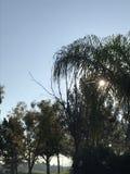 Заход солнца через деревья Стоковые Изображения RF