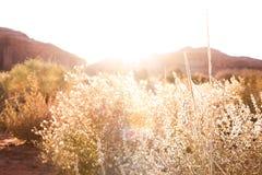 Заход солнца через кусты Стоковые Фотографии RF