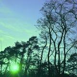 Заход солнца через древесины Стоковое фото RF