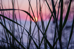 Заход солнца через траву Стоковая Фотография RF