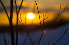 Заход солнца через hogweed старую Стоковые Фотографии RF