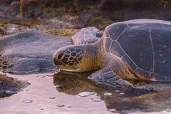 Заход солнца черепахи Стоковое Изображение