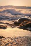 Заход солнца черепахи Стоковое Изображение RF