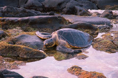 Заход солнца черепахи Стоковые Изображения