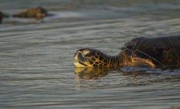 Заход солнца черепахи Стоковое фото RF