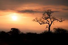 Заход солнца Afican Стоковые Изображения RF