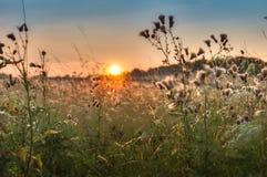 Заход солнца Atmosferic над полем Стоковые Изображения