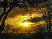 Заход солнца Bushveld Стоковое Изображение