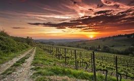Заход солнца Chianti Стоковая Фотография RF