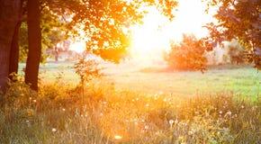 Заход солнца. Glade леса. Стоковое фото RF