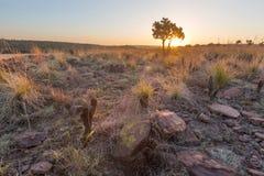 Заход солнца Highveld Стоковые Изображения RF